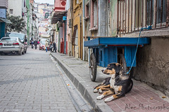_MG_7855.jpg (ecerduransezgin) Tags: city dog pet color animal architecture canon turkey colorful poor istanbul oldcity balat canonefs1855mmf3556isii canonturkey canont4i