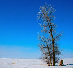 Solitary (Ken Yuel) Tags: winter tree field rural freshair winnipeg alone farm bluesky manitoba orphan solitary soe splendor loney mywinners impressedbeauty goldstaraward fanflickrtastic