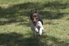 Dog Park 4-13-08-45