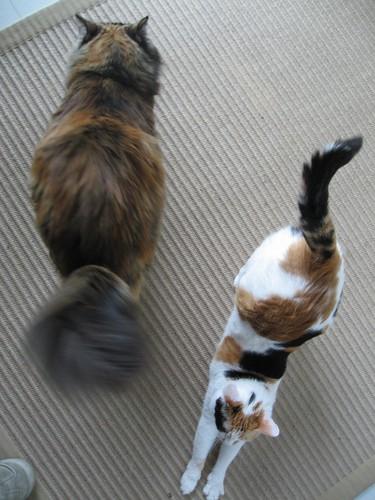 2008-03-28_swish.jpg