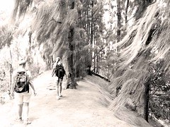 walking through pines (finches_50) Tags: lucy breeze vicki olomanahike