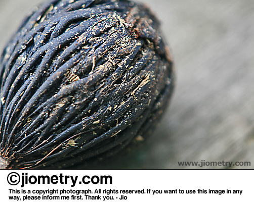 Knotty, woody fruit seed on a bench