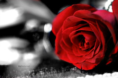 ..  ..   (Weda3eah*) Tags: life red white black flower macro love by out heart you cut your romantic pp weda3eah