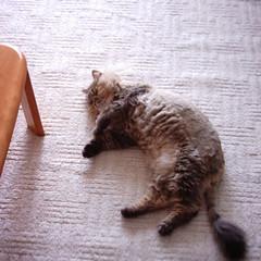 【写真】ミニデジで撮影した室内(ダレる猫)