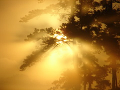 Struck Gold !! _7-13-08 (jimbrickett) Tags: trees fog gold explore rays cubism golddragon ysplix jimbrickett