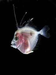 DSCN5175 (sailroue59) Tags: plankton zooplankton fishlarvae biologicaloceanography