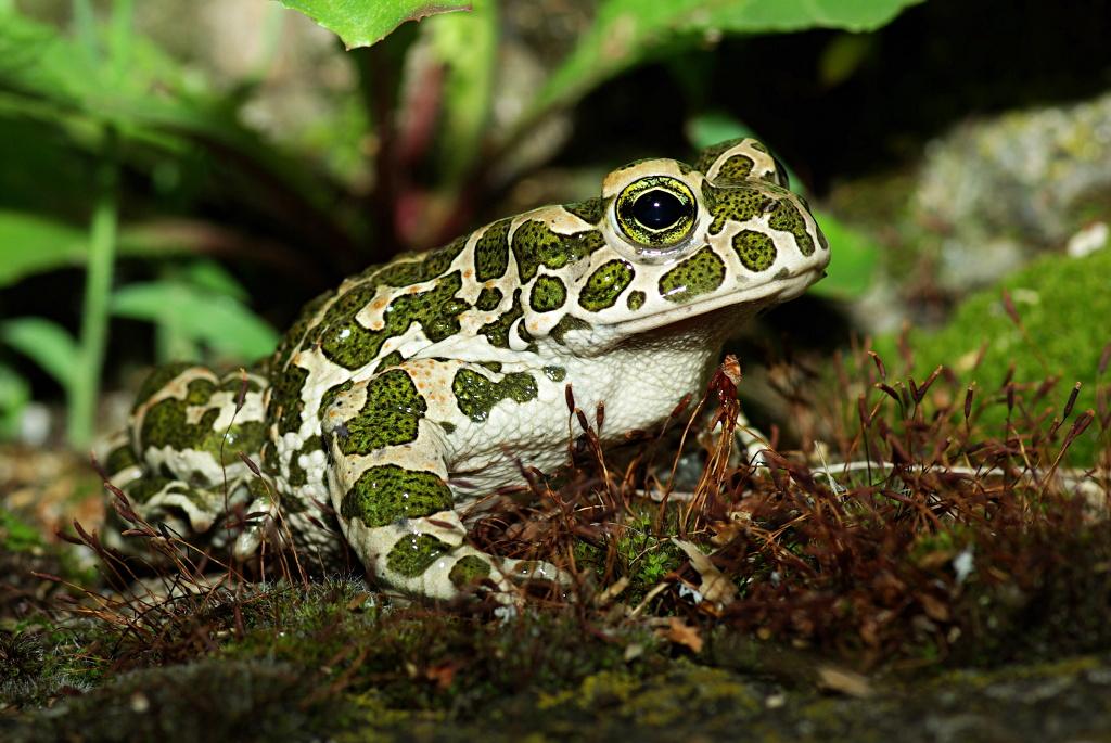 услугам гостей зеленая жаба фото и описание этот день
