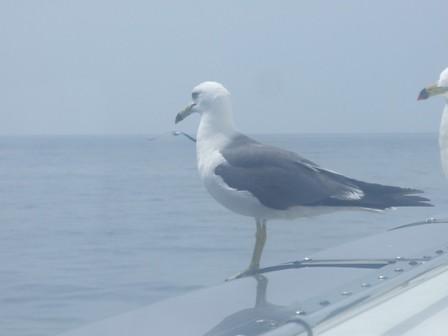 ウミネコ~笹川流れ インターネット乗船予約開始しました