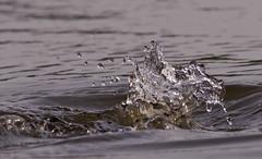 splash (digiphotonut) Tags: lake nature water splash waterdrops