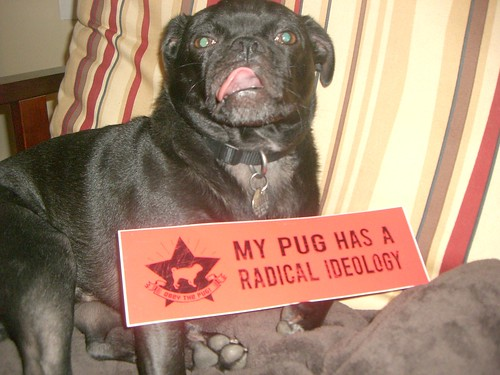 My Pug Has a Radical Ideology
