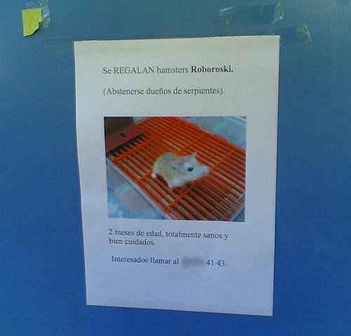 Se regalan hamster roboroski (by jmerelo)
