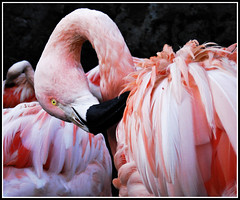 Belleza Flamenca (Errlucho) Tags: