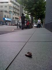 a cicada by road