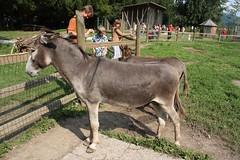 Esel ... oder so (pixel0908) Tags: donkey tierpark esel rosegg