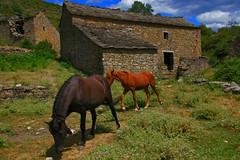 IMG_8996 PIRINEOS 2008