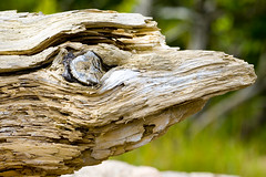 Driftwood (Vermont Lenses) Tags: ocean wood shells coast rocks maine driftwood downeast pigeonhill