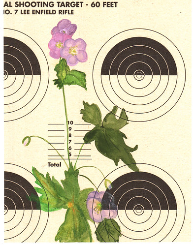 coagulant rifle target :: wild purple geraniums