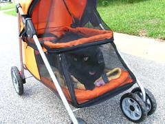 Huggy Bear strollering