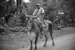 Man and his Bull (joel_johnson) Tags: travel trees vacation portrait blackandwhite animals proud nikon costarica cows d70 boots nikond70 path bull adventure jungle nicaragua tradition centralamerica joeljohnson omtepe ometepeisland joeljohnsonphotography