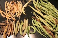 unshelled beans