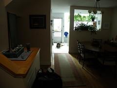 P9210018.JPG (rlg) Tags: dog animal female mammal mutt 21 sunday september 2008 leonberger cassady 0921 fpp 200809 olympussp570uz 20080921 09212008 cassadyrg
