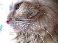 Jasper's whiskers