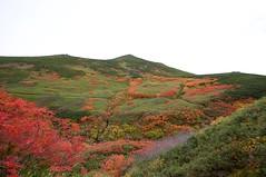 ピウケナイ沢越しに当麻岳を見上げる