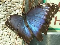 dscf3585 (ottopolina - sorry I cannot be online) Tags: animals toscana butterflyhouse collodi fujis5600 animaladdiction diamondclassphotographer