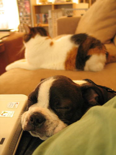 Rupert Asleep