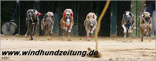 Whippets Nationale Klasse Rüden Finale Sachsenheim