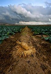 Llovio en tiempos de crisis (SanchezCastillejo) Tags: murcia sombrero campos alhama