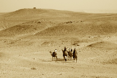 Camels crossing desert