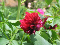 Flora & Fauna (Klementine's Photo Hub!) Tags: flowers colors rainbow florafauna
