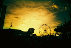 One cow, one ferris wheel (kevin dooley) Tags: eve autumn sunset arizona sky favorite cloud sun fall film phoenix beautiful wheel silhouette yellow analog 35mm wow giant lens gold book evening cow fairgrounds interesting fantastic lomo xpro lomography crossprocessed flickr pretty fuji slim sundown state very good gorgeous awesome wide award superior fair ferris super best 64 plastic most winner stunning excellent much tungsten 2008 incredible fujichrome cheap viv vivitar ultra breathtaking exciting phenomenal t64 iso64 vivalaviv book0