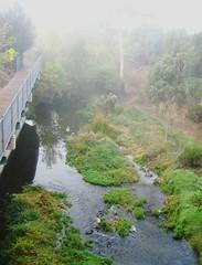 misty_creek