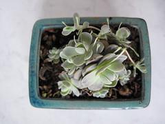 IMG_0188 (Plantules) Tags: fleurs novembre au taipei 2008 marché