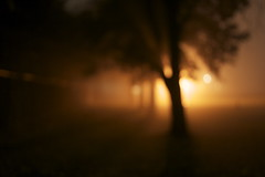 . (vrai the dotty prof.) Tags: light blur tree field silhouette fog night dark lackoffocus lackingfocus img6980