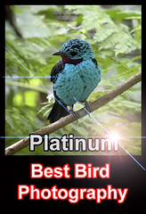 The Best Bird Photography International
