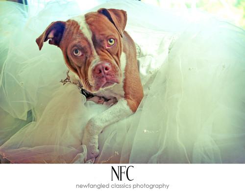 piglet's bridal session 2