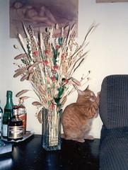 Manigoldo (..:*  *:..) Tags: red baby love cat fur ginger kitten chat you kitty houston ill gato whitney mamma always katze fiori rosso divano gatto gesso gatito quadri composizione salotto liquori supershot secchi tiragraffi dellamamma