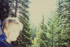 heather blurry in trees (Pinnacle, Montana, United States) Photo