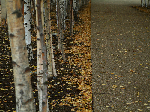 tate trees