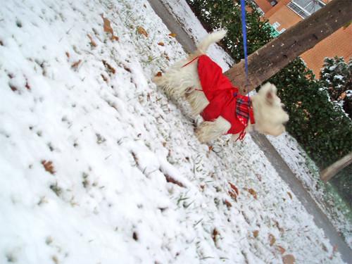 Más perrón y más nieve