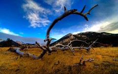 wooden antlers (-12C) Tags: wood travel sky grass clouds landscape colorado perspective wideangle deadwood hdr rockymountainnationalpark mountainrange d90 abigfave tokina1116mmf28