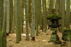 Luminosit dune bambouseraie.1 (en route vers(La galerie de Jean-Marc Pinede)) Tags: japan zen japon bambouseraie luminosit dune