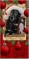 Flash says Merry Christmas (javadoug) Tags: santa christmas new dog greyhound nature hat weihnachten happy year merry jahr neues frhliche glckliches javadoug greytholiday