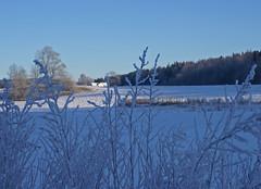 Winter blues - 2