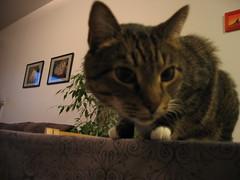 IMG_2778 (Niina J.) Tags: eläimet koirat kissat osmo