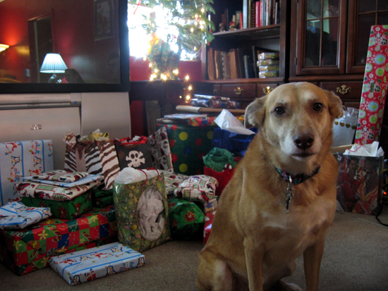 Una with Christmas Gifts (Click to enlarge)