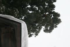 IMG_0847 (shinyai) Tags: japan aomori hirosaki